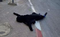 Young Palestinian girl martyred by zionist gangs